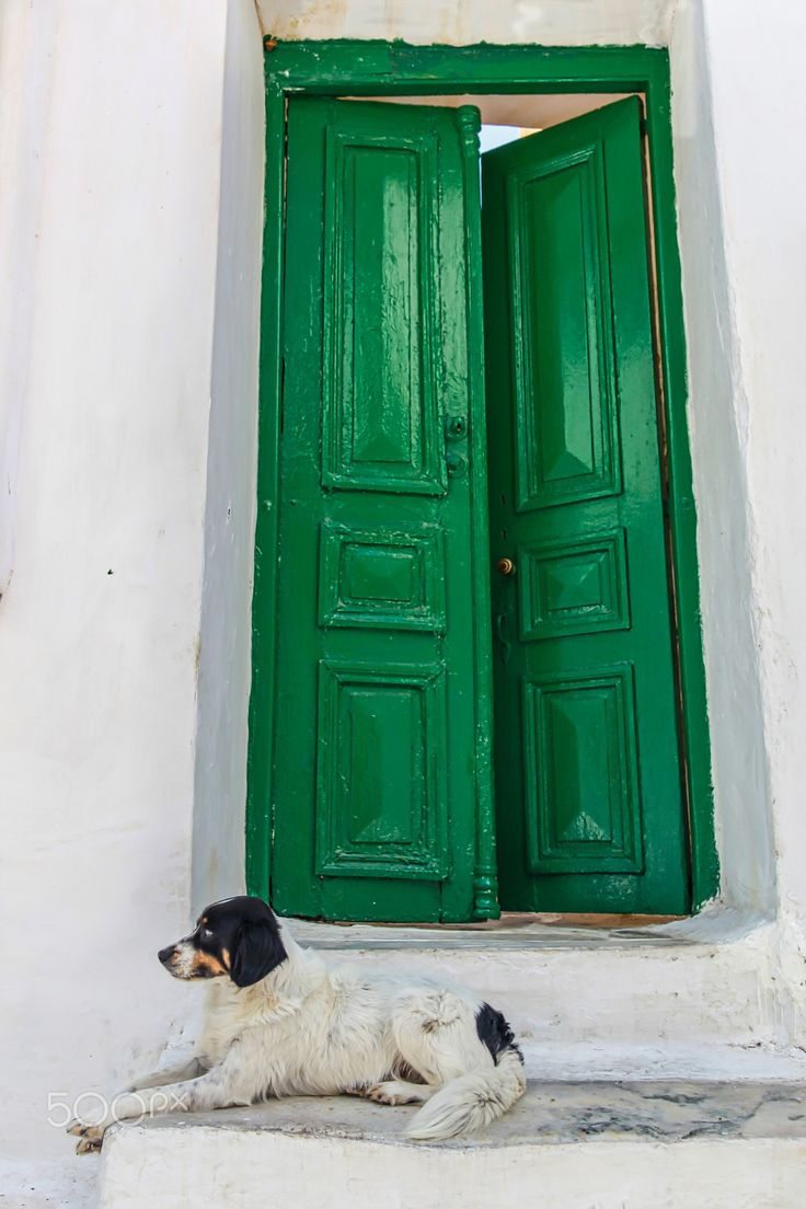 Door Charmer - Walking down the street of Mykonos I saw this dog walking on his own and then relaxing on this doorstep.