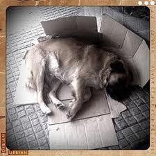 Homeless dog sleeping on card boards