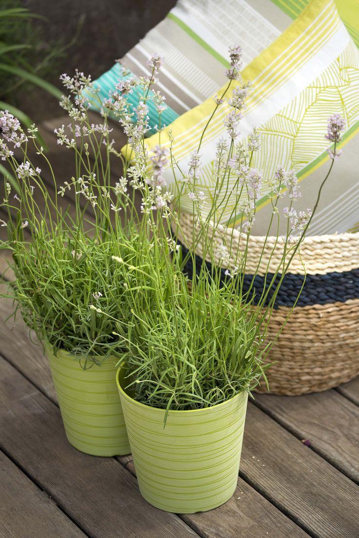 Bac A Plantes Aromatiques dedans 28 best un �t� dans le jardin images on pinterest