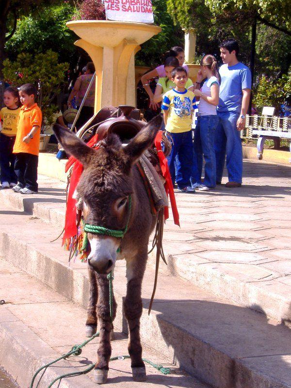El Donkey - Juayua, Sonsonate.-El Salvador