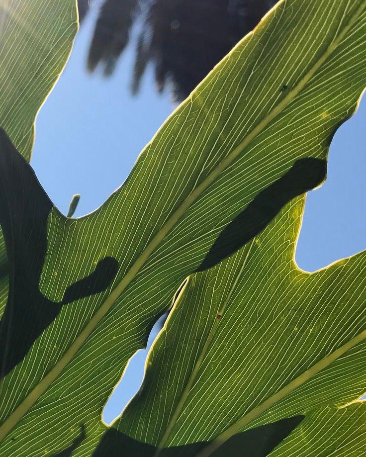 color nature sky plant life naturescolorpalette j66labs j66 co a boutique
