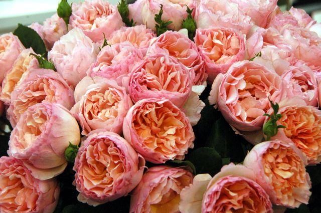 rose Haiku Romantika - Tìm với Google