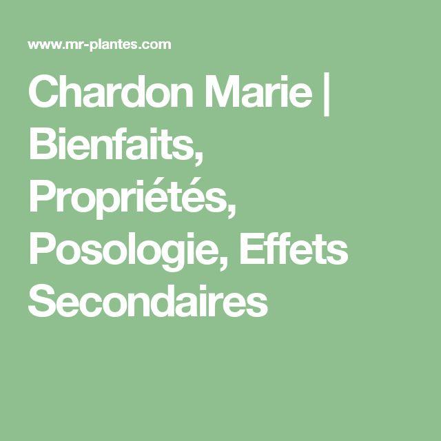 Chardon Marie | Bienfaits, Propriétés, Posologie, Effets Secondaires