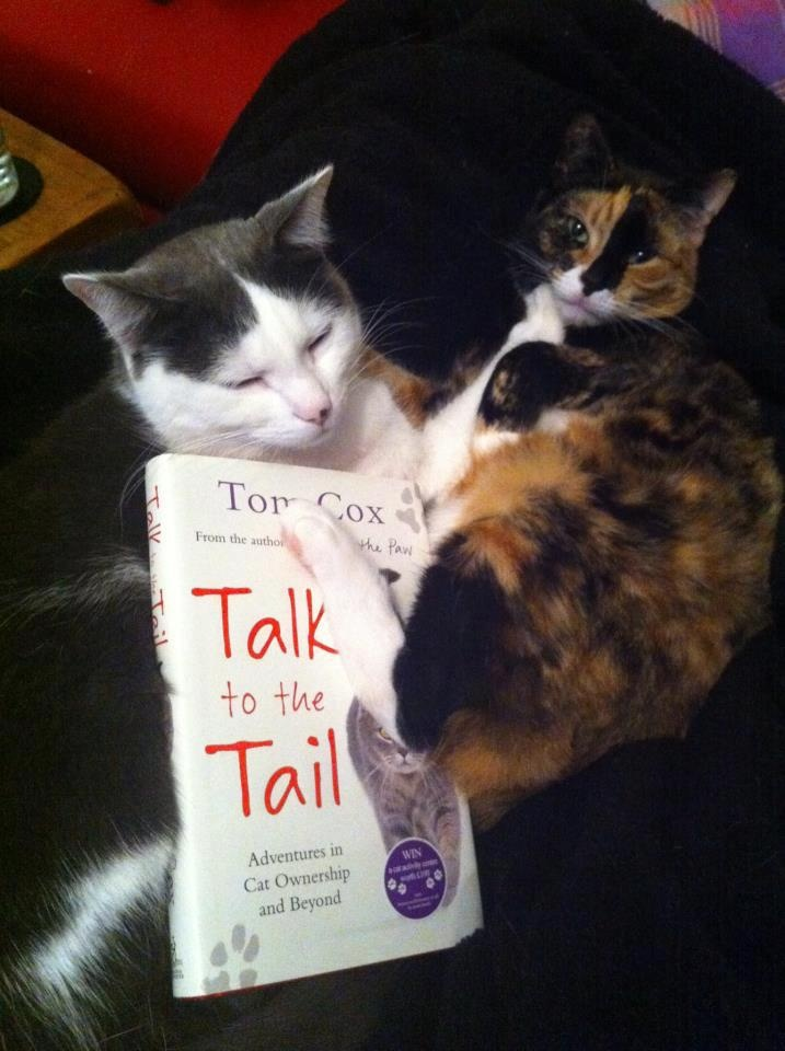 """A white and grey cat generously pushing its tortoiseshell friend out the way so it doesn't see the bit in this book where I say """"tortoiseshell cats are often mental""""."""