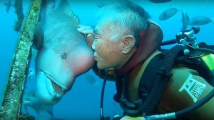 Mengharukan! Bersahabat Selama 25 Tahun, Begini Cara Diver Tua Ini Panggil Ikan Raksasa