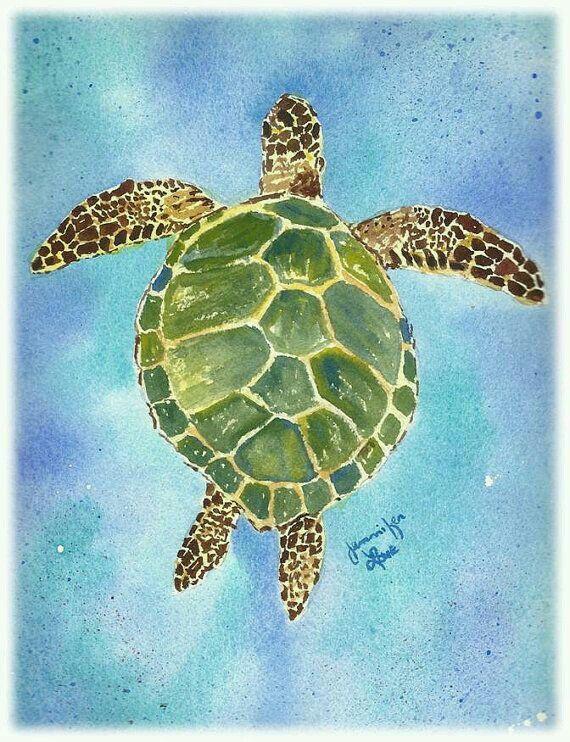 730 best turtles fish images on pinterest pisces fish for Turtle fish paint