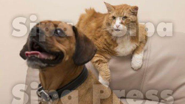 Don de sang : un chien sauve la vie d'un chat