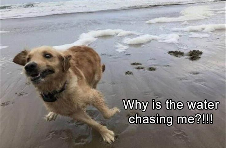 Why is the water chasing me?
