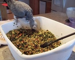 Recipes for feeding parrots including cooked bird food and bird bread.