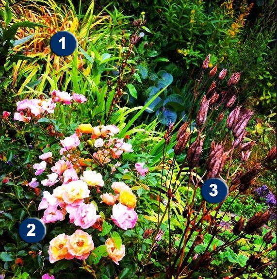 decorosiers2 54378d8b07a47 Plantation, Jardins et Rosier