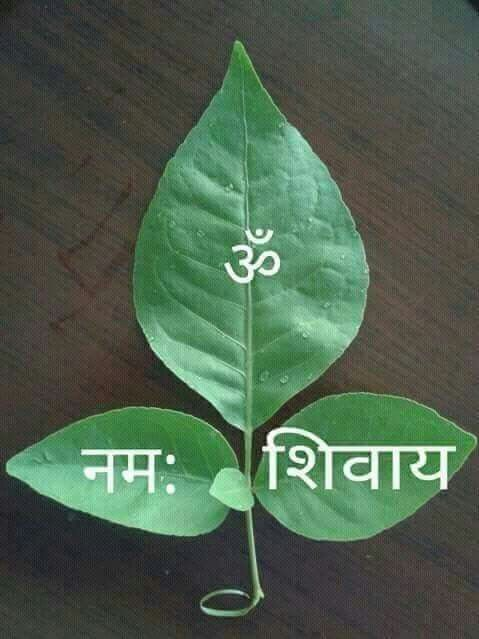 Bilva leaves, Shiva is worshiped with flowers and #Bilva #leaves