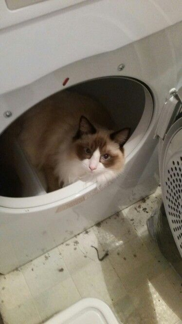 Well that's one way to get dry? Love my furry baby xxxx