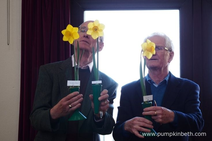 The Daffodil Society's Show Judges, Richard Hilson and Robin Couchman, examining some of the entries.