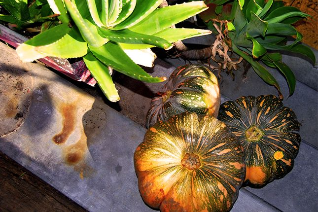 Moore & Moore pumpkin soup recipe