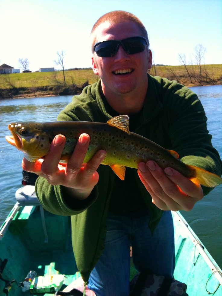 17 best images about arkansas fishing etc on pinterest for Best trout fishing near me