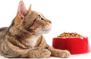 Why Natural Cats Food Doesn't Always Mean Healthy?