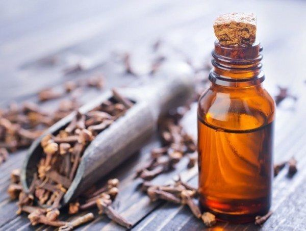 My favorite Clove Oil is through Young Living.