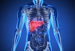 Caution Against Liver Cancer