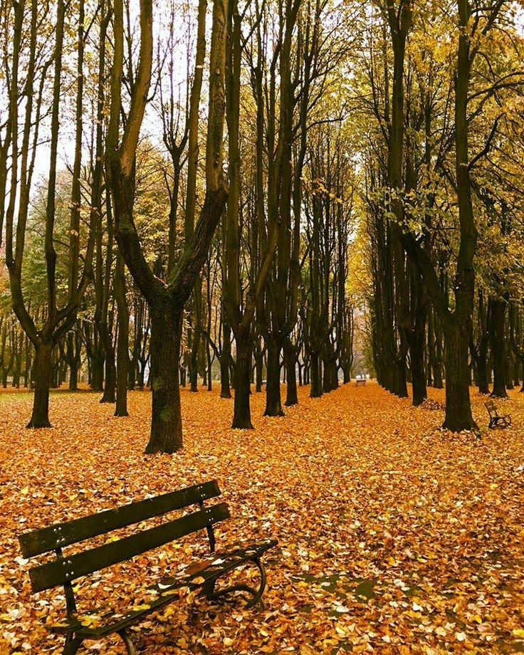 Parco di Monza, Monza, Italia.