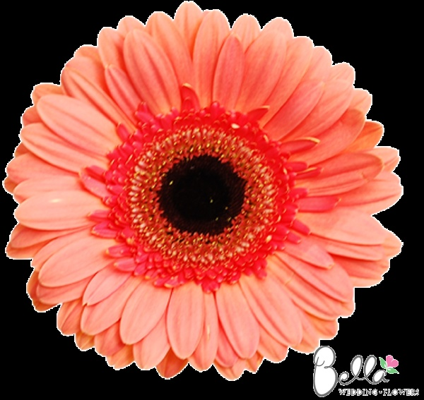 1000 images about pink wedding flowers on pinterest hot
