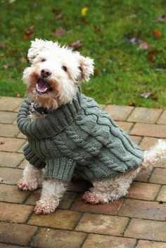 Keep your favourite four-legged friend super comfy in chilly weather with this knitted dog jumper