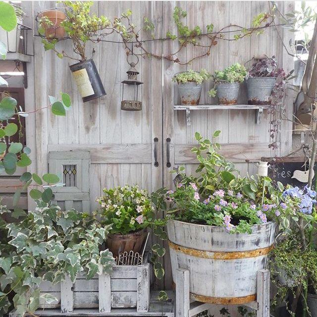 ai.さんの、ベランダガーデン,veranda,植物,ベランダ,ベランダガーデニング,原状回復ок,賃貸,a.s.g,On Walls,のお部屋写真