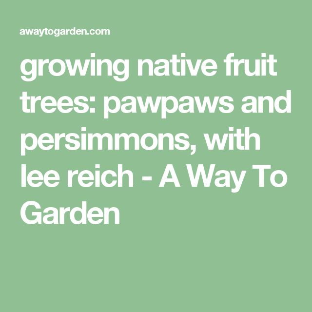 growing native fruit trees: pawpaws and persimmons, with lee reich - A Way To Garden