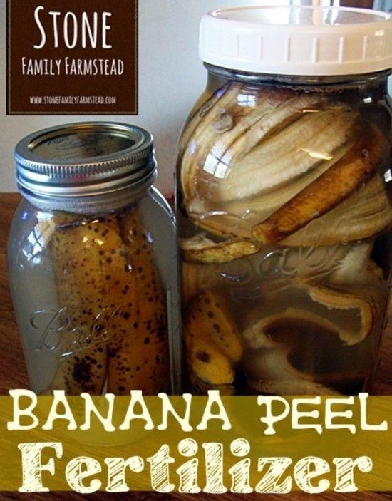 Banana Peel Water Fertilizer