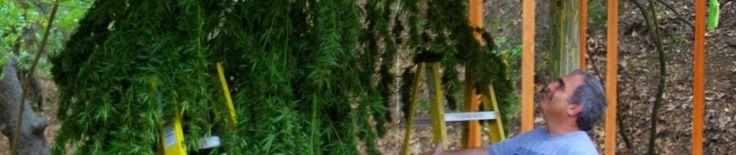 Medical Marijuana Doctor, Evaluations for Medical Marijuana Forms Marina Del Rey, Los Angeles, California