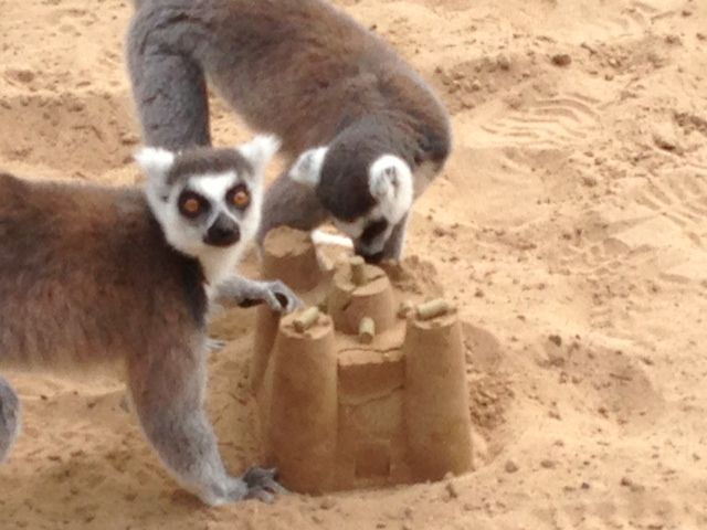 Sand castle enrichment. This could actually be super-easy even if your enclosure doesn't have sand. Bag of sand, dampen and put into molds with treats inside, place in enclosure!