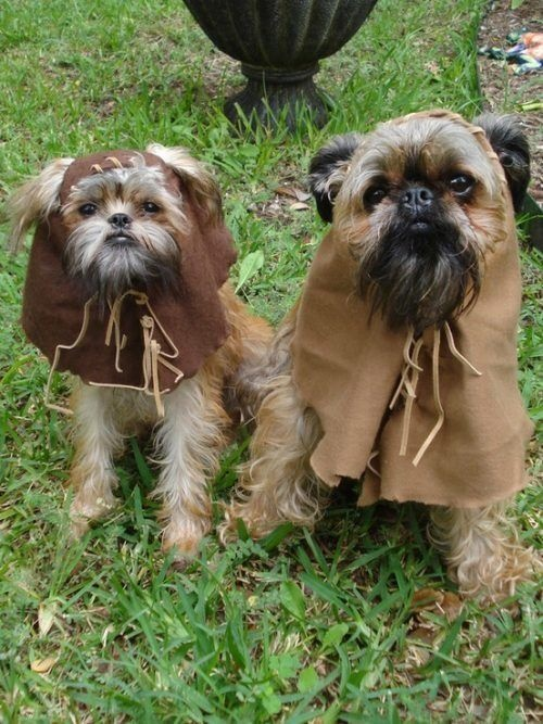 Since my dogs are named with Star Wars in mind because they looked like baby Ewoks (we have Kowe-ewok spelled backward- and Luke), I think these are fitting halloween costumes.