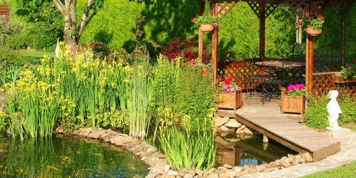 L 39 entretien du bassin jardin d 39 eau plante de bassin for Entretien plantes jardin