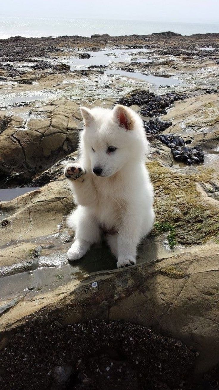 best puppies images on pinterest animals dog cute puppies and