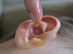 Unerträgliche Ohrenschmerzen aufgrund von Verschmutzung und bakteriellen Entzündungen im Gehörgang.