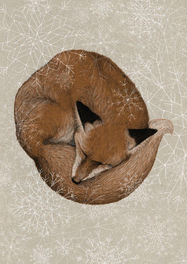 Sleepy fox is already dreaming of winter.