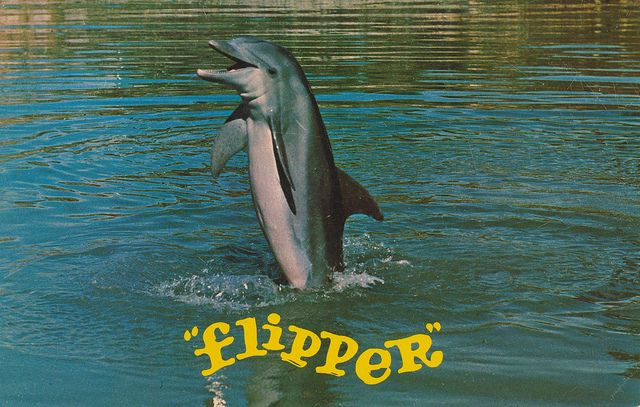 """Flipper"", star of TV program on NBC, 7:30 Sat. nites performs his tail walking act while the series is being filmed at Miami's Fabulous SEAQUARIUM."