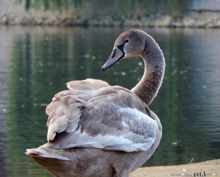 #swan  http://photo-wroclaw.blogspot.com/2014/10/miasto-budzi-sie.html