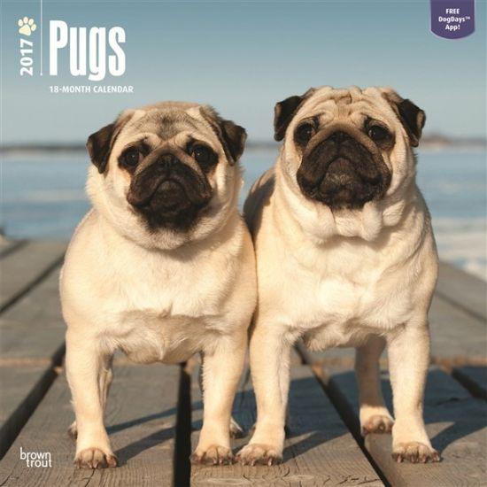 Honden kalender 2017 Mopshond. Een luxe full colour kalender van 120 grams glossy papier met 13 verschillende kwaliteitsfoto's van uw favoriete rashond. Elke kalendermaand heeft ruimte voor uw persoonlijke notities. De kalender is circa 30 x 30 centimeter en heeft 24 pagina's.