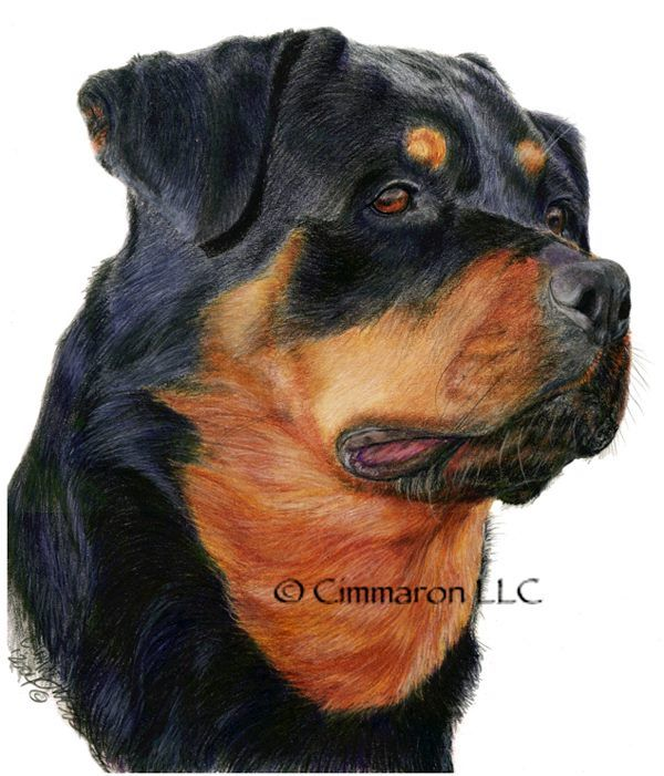 Beautiful #Rottweiler picture