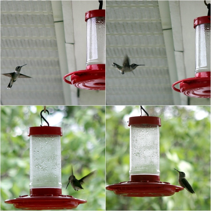 Amazing Hummingbirds & Sugar Water Recipe for Feeders