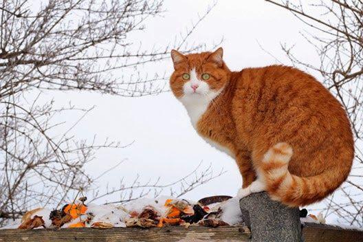 Odstraszacze kotów