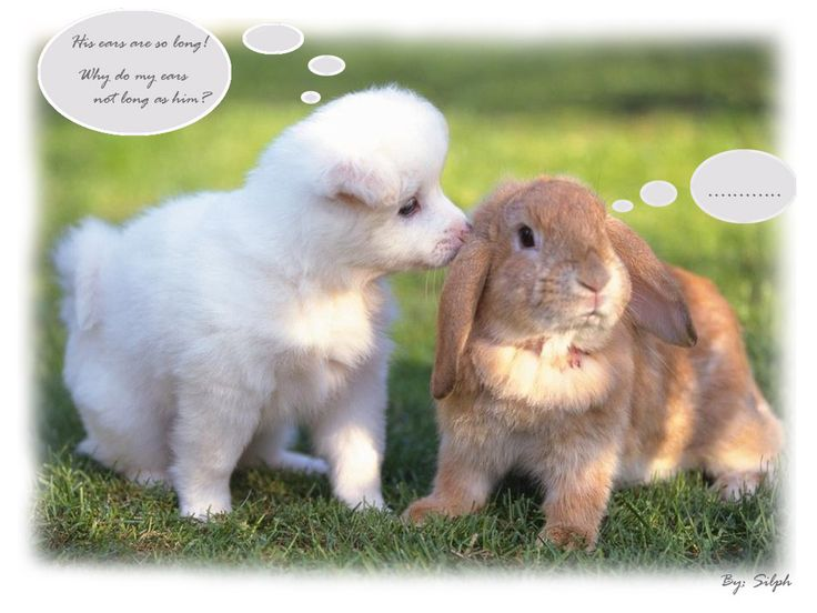 Cute puppies with captions wallpaper