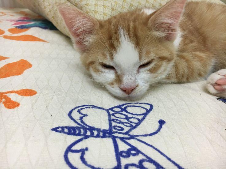 Ginger 🐱