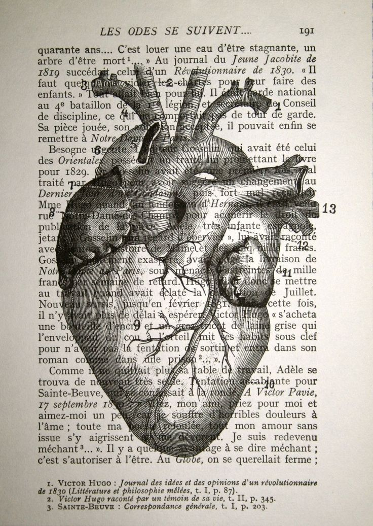 Human heart anatomy vintage - photo#15