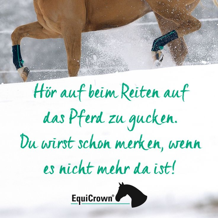 Stop looking at the horse while riding. You will notice when it is no longer there. EquiCrown: Your partner in compression therapy for …