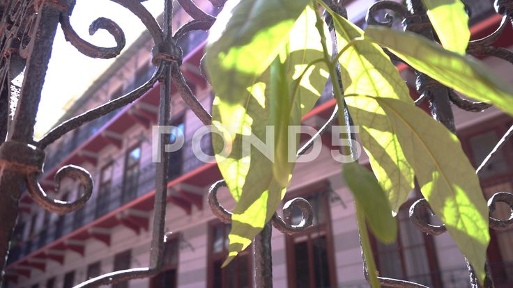 Sunshine plant - Stock Footage | by botiordog