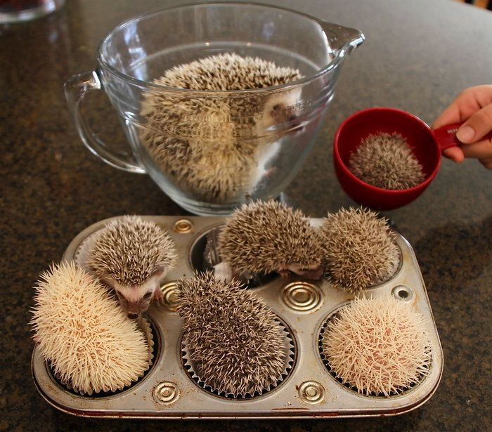 ALL THE HEDGIES!!!