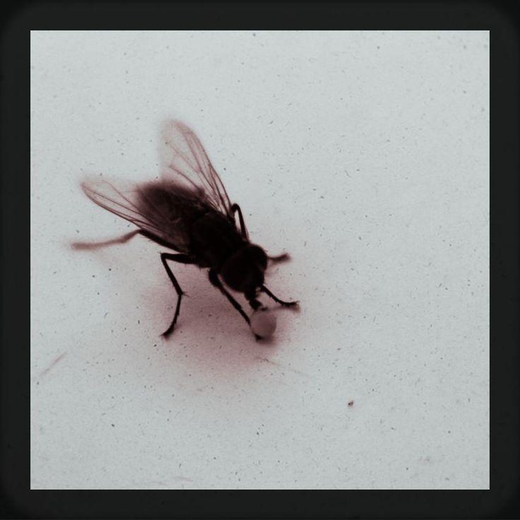 eliminadores de cadáveres. | Flickr - Photo Sharing!