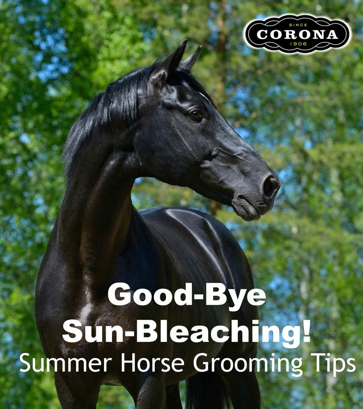Tired of your dark horse fading in summer? Learn how to prevent unsightly sun-bleaching with these handy tips! Be sure to download your Corona Detangler  Shine Coupon after reading the post  http://info.mannapro.com/mannaproanimalcareblog/bid/183473/Good-Bye-Sun-Bleaching-6-Summer-Horse-Grooming-Tips