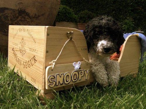 Hundebett aus Weinkiste selber machen (für kleine Hunde), von corinna